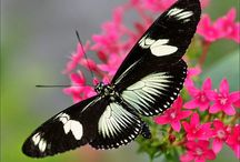 "Birds & Butterflies / Welcome to Birds & Butterflies board. Please add to this board pins related to only ""birds , butterflies , ladybugs"" . Do not pin more than 4 pins at a time. Keep pins exclusive ( Repin and UPLOAD NEW PINS ) - I don't want to add your friends to this board . Enjoy your Pinning life !"