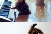 Adorable pets / Too adorable