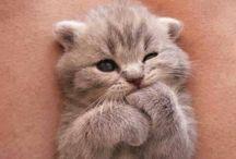 the cuteness!