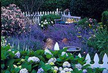 le Jardin / by Cisco Washington
