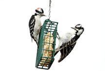 Wild bird feeding
