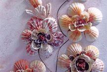 deniz kabukları  sea shells