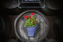 PROMOCION 2013 - XXX Cata del Vino Montilla Moriles / La XXX Edición de la Cata del Vino se celebra en Córdoba del 16 de abril (noche) al 21 de abril. La Cata 2013 va dedicada a los Patios de Córdoba