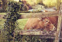 Farm Life / by Desiree Duke