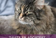 Adopted animals 2015 / A handful of adopted animals in the year of 2015