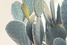 palmy kaktusy