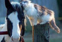 Love horses / Horses - konie