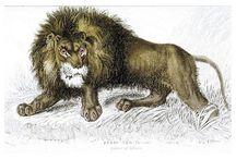 Naturalist library. Felidae / Naturalist library. Felidae postcards