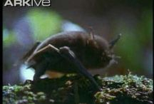 shorttailed bats