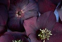 Ziyaret edilecek yerler / Çiçek resimleri