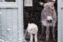 ロバ  Donkey