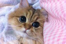 Gatos lindos de AGUS