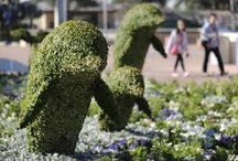 topiaries / by Anitalynn Katz