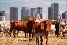 All things Texas!!!! / by Genesis Events, Inc.