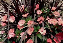 kwiaty ogród