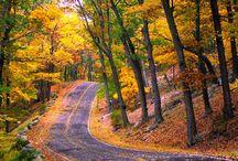 :: Autumn ::