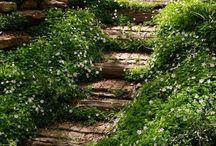 Paths to follow / by Rosslynn Burt