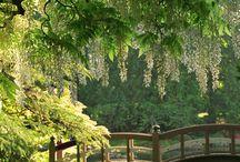 Natureza / florestas, jardins, árvores