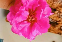 ~ Flores de casa