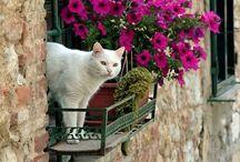 cat in window & door②