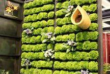 murs vegetalises