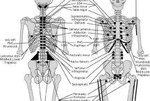 Neurolymphatic points