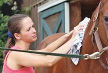 Vasbyt Farms Horse tips and tricks