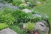 Rock Gardens (Alpines) / All about rock gardening. Using alpine plants, tips and ideas for creating attractive gardens using rocks