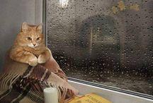 katten boeken