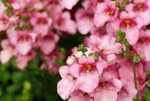fleurs pour potées