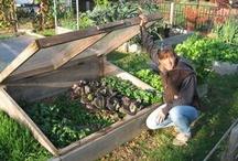 Front Yard Garden Ideas / by Naomi Nieser-Allen