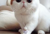 хочу такого кота :З