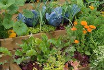 Garden Dreams {someday}