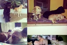 ♡♡ My family ♡♡ / Scooby, Fifí, Xena and Botones.