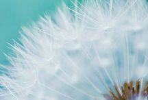 Make A Wish! / by Patryce Abbott