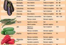 calendário de plantio de hortaliças.