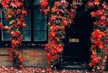 színes ősz