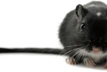 Conseils animaux / Zoomalia vous fourni des fiches pratiques pour vous guider lorsque vous débutez auprès de vos nouveaux petits compagnons #conseils #fiche #animaux #animalerie