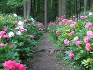 Garden care.