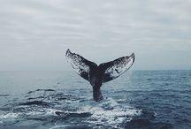 Whale / Whale