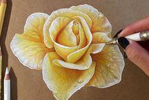 Disegni di rose rosa gialla