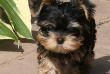 Mini Dogs and Cute Pets / Pets that melt my heart