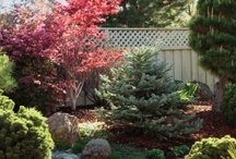 Water wise landscapes