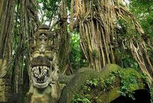 Bali Ancient Trees / Bali Ancient Trees