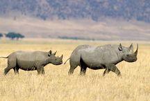 Best Wildlife Safaris In Africa