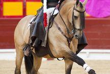Lusitanos and Baroque horses