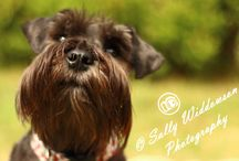 Pet Photography - Dogs. Taken by me / My favourite pictures of dogs from pet photoshoots I have done