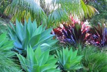 Sydney Landscaping / ideas to inspire your garden transformation