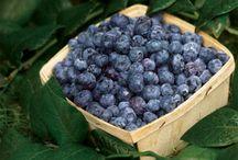 Veg / fruit garden