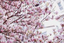 Spring (lte)